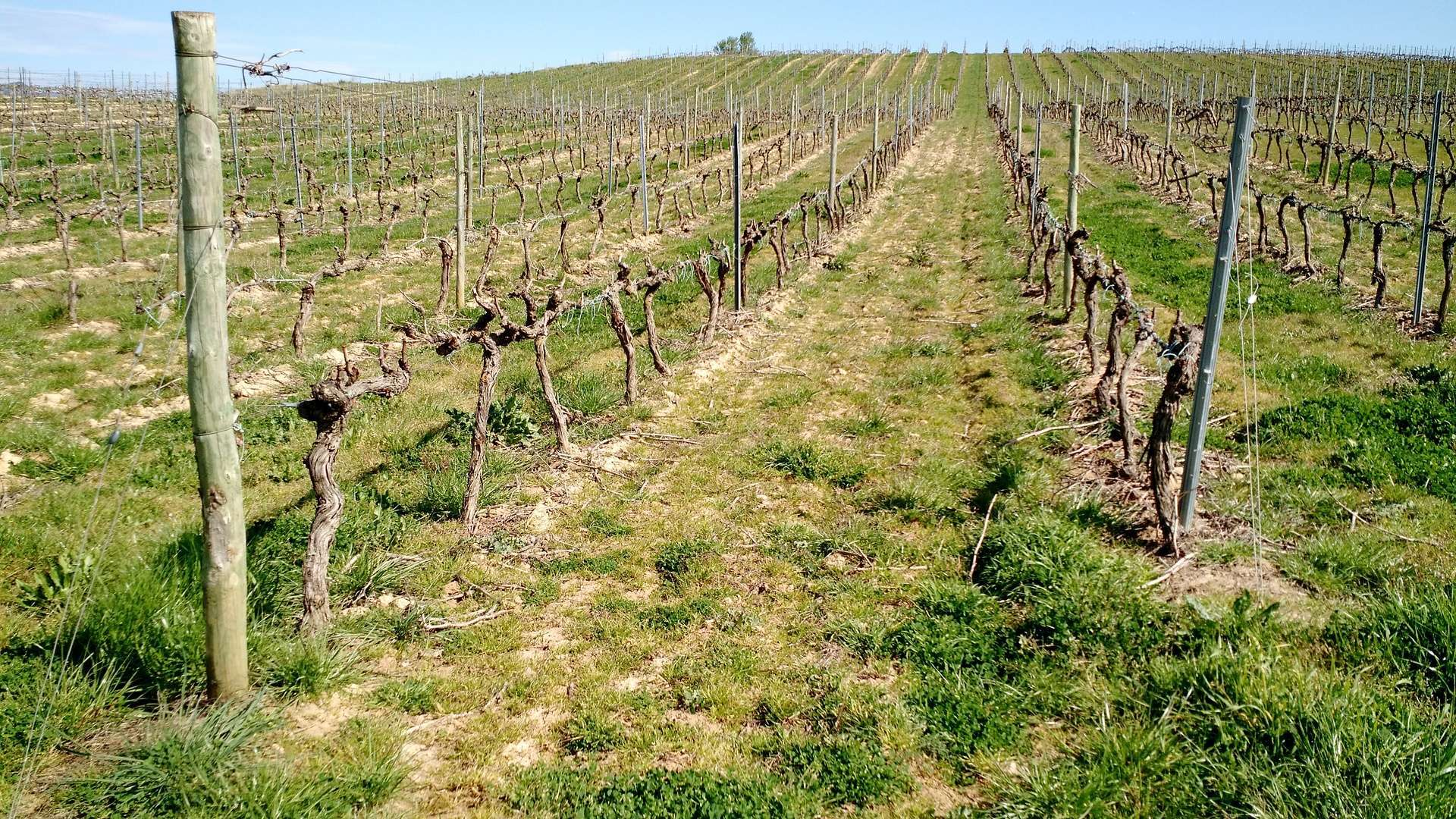 One of the vineyards on La Ruta del Vino